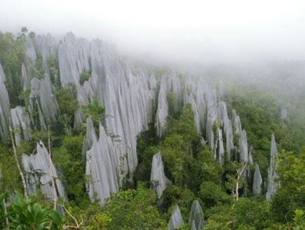 ג'ונגל 1 - בורנאו (צילום: istockphoto)