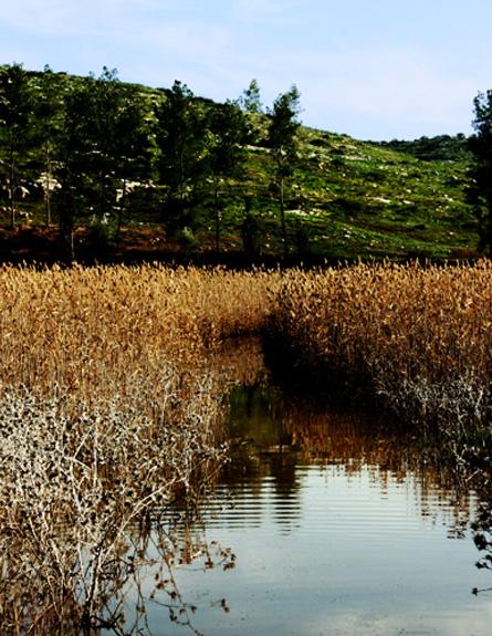 אגם אדוריים (צילום: עידו אלנבוגן)