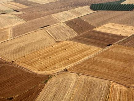 שדות עמק בית שאן (צילום: אלינור)