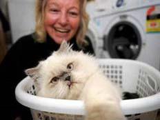סחוטה אך נקייה, קימבה החתולה עם בעליה. (צילום: מנלי דיילי)