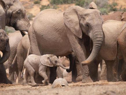 אדו פארק - אפריקה (צילום: istockphoto)