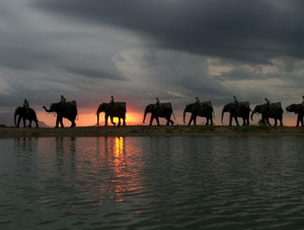 פארק קרוגר - אפריקה (צילום: Philip van den Berg, Istock)