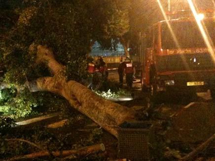 העץ שקרס בתל אביב (צילום: CH2NEWS)