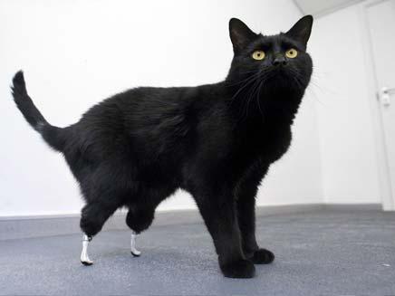 אוסקר החתול הביוני (צילום: AP)