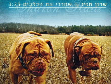 שרון חזיז, עטיפת סינגל, שחררי את הכלבים (צילום: נועם לבקוביץ')