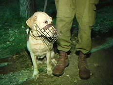 אחד הכלבים שסייע במאמצי החיפוש (צילום: חדשות 2)