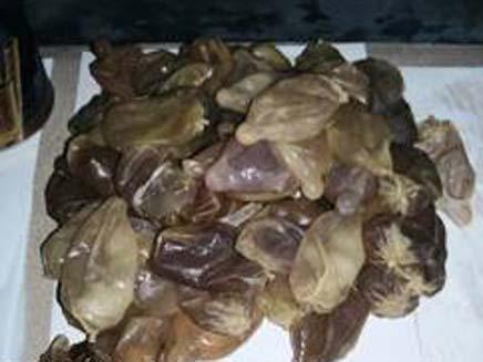 """הבלדרים מקולומביה הבריחו סמים בגופם (צילום: משטרת ישראל, מחוז ת""""א)"""
