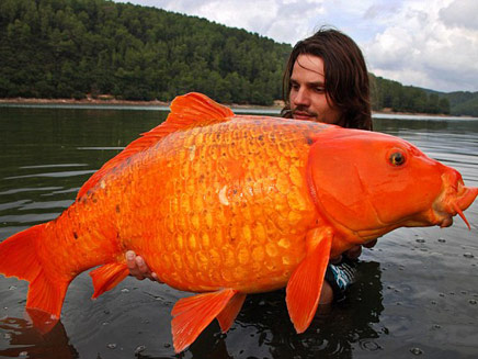"""כמה משאלות אפשר לבקש מ-15 ק""""ג דג זהב (צילום: mailonline)"""