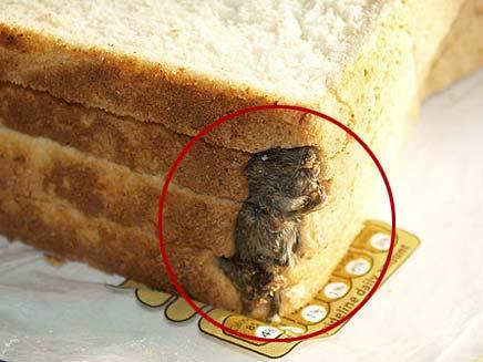 עכבר מת בכיכר (צילום: הסאן)