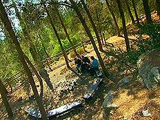 יער עמינדב