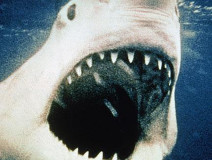 כריש - מלתעות (צילום: Getty Images, GettyImages IL)