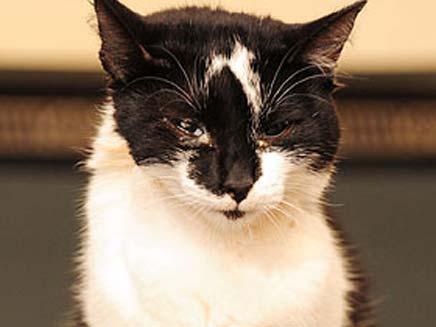 התעללות בחתול (צילום: רוס פרי)