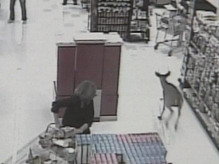 """צבי התפרץ לחנות מכולת בארה""""ב (צילום: חדשות 2)"""