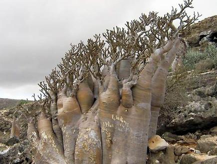 סוקוטרה – אי חייזרי באוקיינוס ההודי