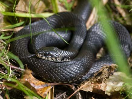 עונת הנחשים החלה מוקדם השנה. תצלום אילוסטרציה (צילום: רויטרס)