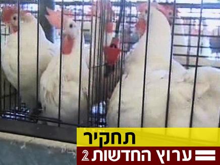 התרנגולות מתו, הביצים שווקו (צילום: חדשות 2)