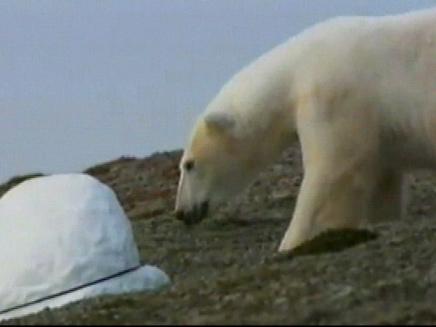 אלסקה: דב תקף קבוצת מטיילים (צילום: חדשות 2)
