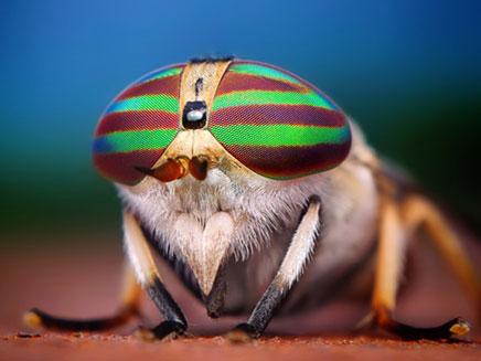 החרקים מזווית שלא הכרתם (צילום: telegraph)