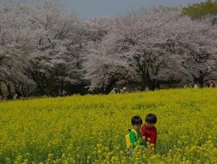 ילדים באחו פורח יפן (צילום: ארגון התיירות הלאומי ביפן, האתר הרשמי)