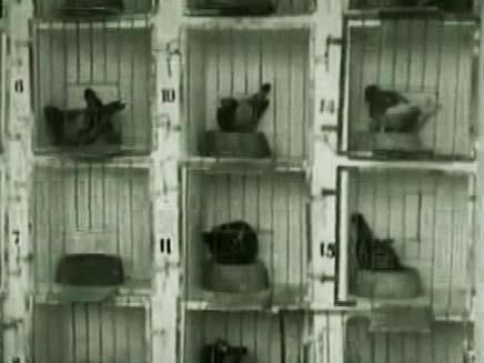 המעופפים הנועזים (צילום: חדשות 2)