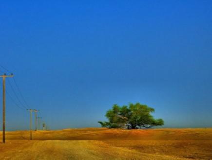 עץ החיים בבחריין (צילום: flickr)