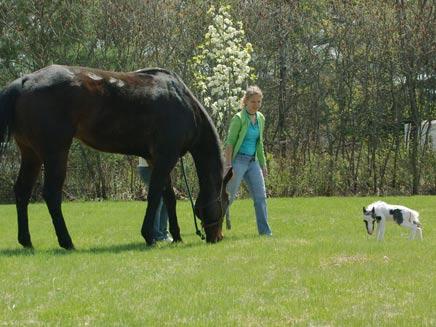 מי הזמין סוס? ארכיון (צילום: reuters)