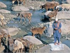 פקיסטן (צילום: נפתלי הילגר, גלובס)