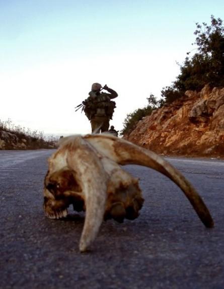 פזם גולגולת של חיה על כביש ברקע חייל הולך