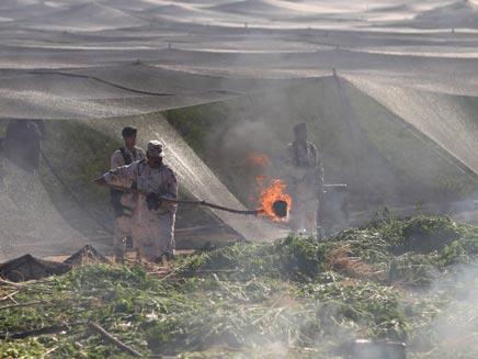 חיילי צבא מקסיקו משמידים את הסמים (צילום: AP)