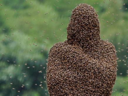 מאות אלפי דבורים על כוורן אמיץ אחד (צילום: רויטרס)