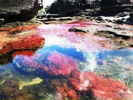 נהר חמשת הצבעים קאנו קריסטל (צילום: האתר הרשמי)