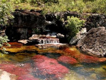 נהר חמשת הצבעים קאנו קריסטל שקוף