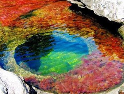 נהר חמשת הצבעים קאנו קריסטל שקע צבעוני