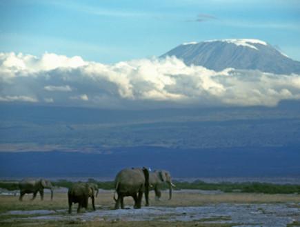 טנזניה (צילום: Liz Leyden, Istock)