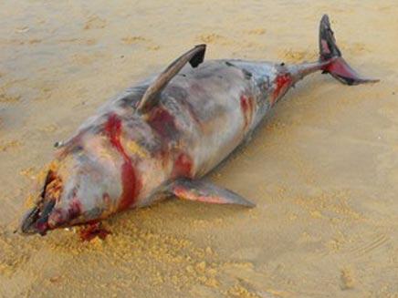 הדולפין באשדוד, היום (צילום: אשדודנט)