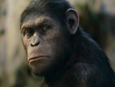 טריילר כוכב הקופים: המרד (תמונת AVI: mako)