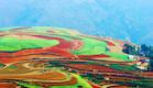 שדות צבעוניים בסין (צילום: האתר הרשמי)