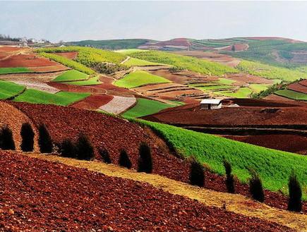 שדות צבעוניים בסין