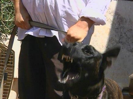 כלבי התקיפה של מייק (צילום: חדשות 2)
