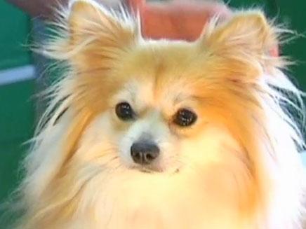 """הכלב ה""""שודד"""" (צילום: חדשות 2)"""