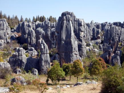 יער באבן
