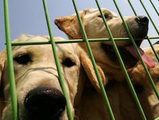 כלבים מסכנים