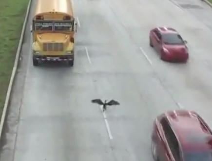 ציפור וכביש