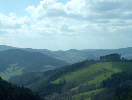 יער הגשם (צילום: Arminia)