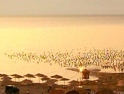 ים המלח (תמונת AVI: mako)