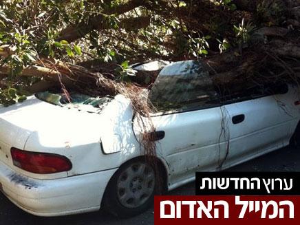 העץ על רכבו של עדי. ניצל בנס (צילום: חדשות 2)