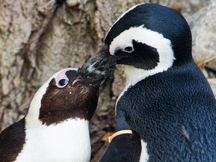 הזוג המאוהב, חוזרים להיות ביחד (צילום: רויטרס)
