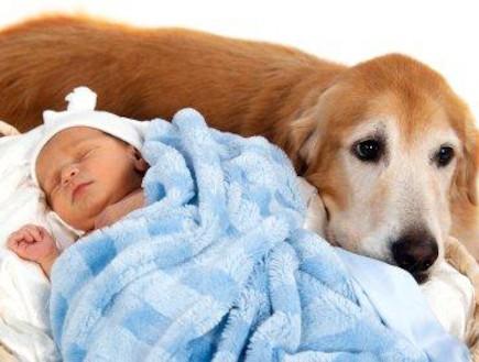 כלב שוכב ליד עריסת התינוק (צילום: Shannon Long, Istock)