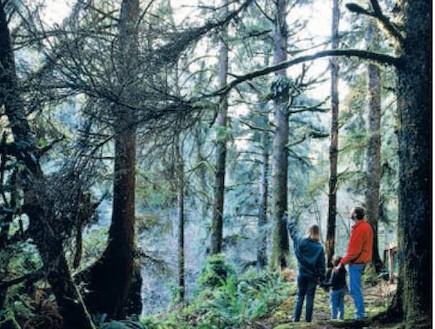 לנשום את אויר היער - בכלל לא מסיליקון (צילום: יעקב שקולניק,ויז'ואל,gettyimage ישראל)
