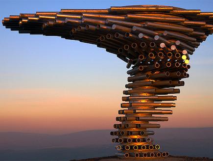 עץ מוזיקלי (צילום: calydelphoto, flickr)